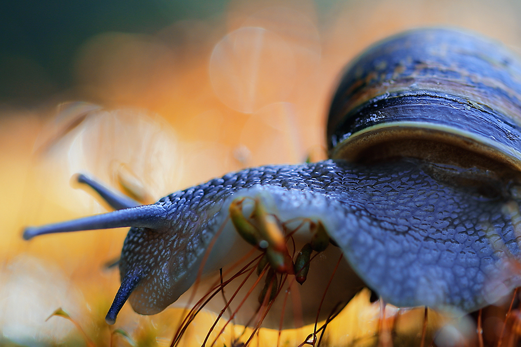 Garden,Snail,2 , Macro Photography Ireland